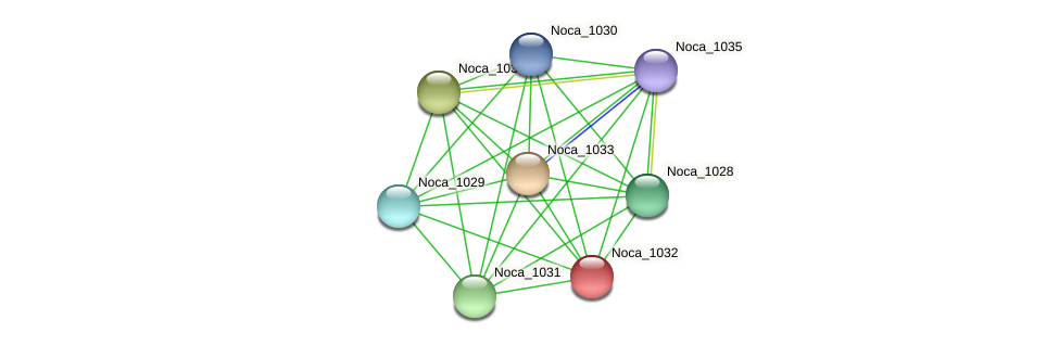 Noca_1032 protein (Nocardioides sp. JS614) - STRING interaction network