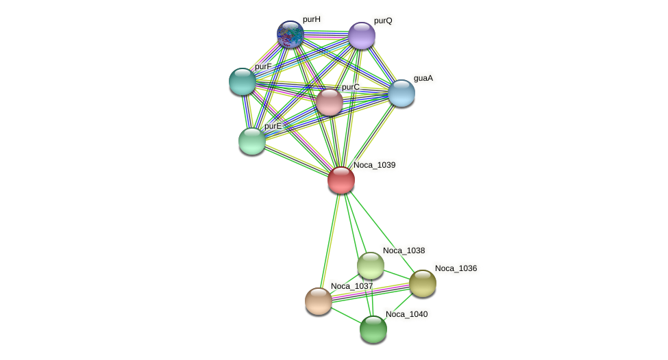 Noca_1039 protein (Nocardioides sp. JS614) - STRING interaction network