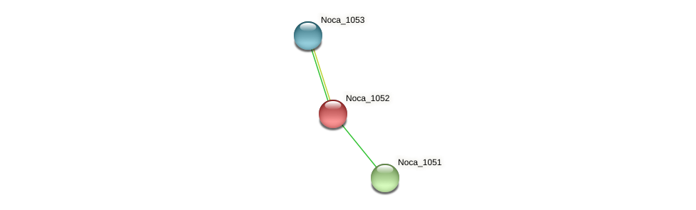 Noca_1052 protein (Nocardioides sp. JS614) - STRING interaction network