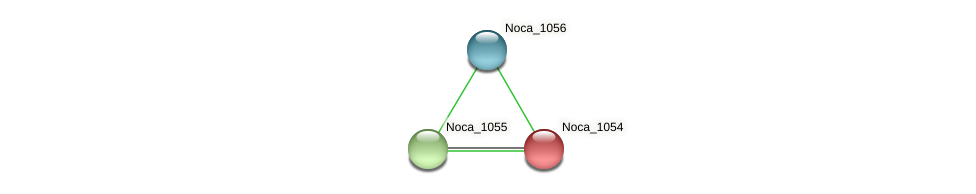 Noca_1054 protein (Nocardioides sp. JS614) - STRING interaction network
