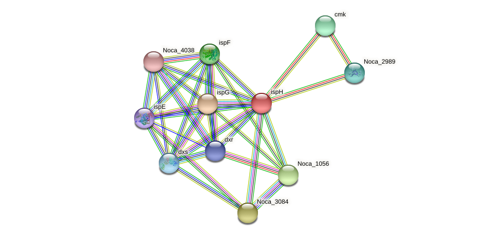 ispH protein (Nocardioides sp. JS614) - STRING interaction network