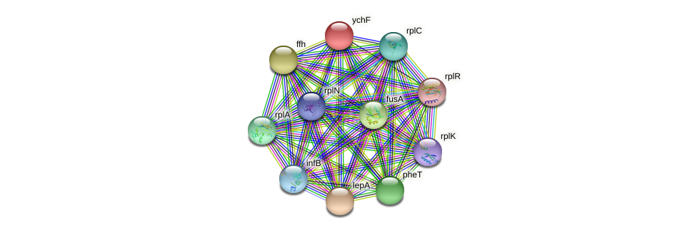 ychF protein (Nocardioides sp. JS614) - STRING interaction network