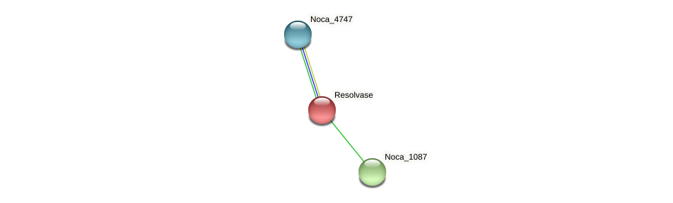 Noca_1088 protein (Nocardioides sp. JS614) - STRING interaction network