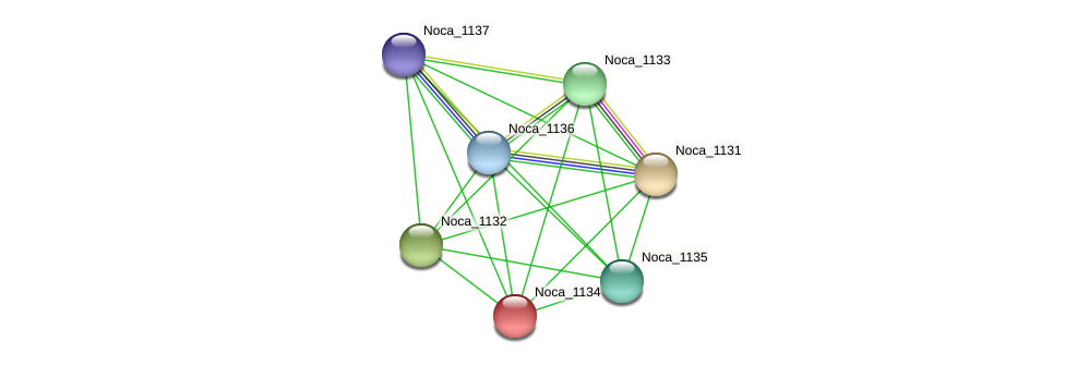 Noca_1134 protein (Nocardioides sp. JS614) - STRING interaction network