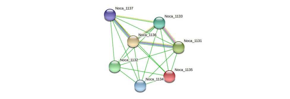 Noca_1135 protein (Nocardioides sp. JS614) - STRING interaction network