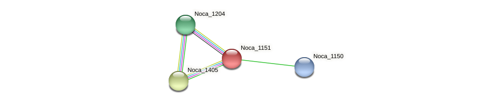 Noca_1151 protein (Nocardioides sp. JS614) - STRING interaction network