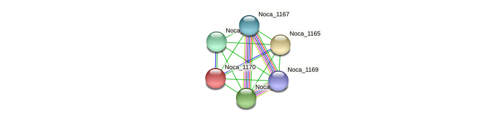 Noca_1170 protein (Nocardioides sp. JS614) - STRING interaction network