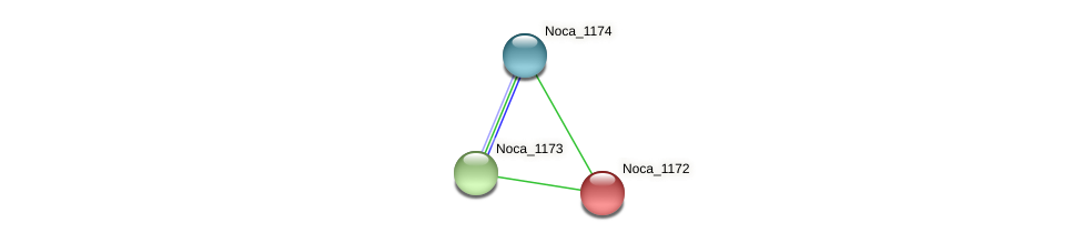 Noca_1172 protein (Nocardioides sp. JS614) - STRING interaction network