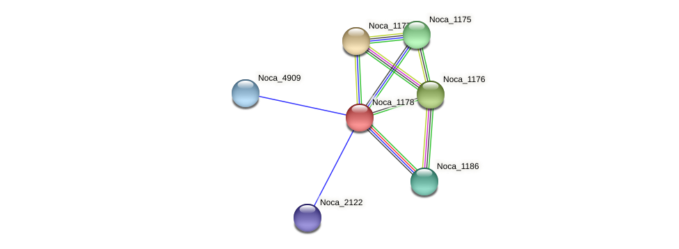 Noca_1178 protein (Nocardioides sp. JS614) - STRING interaction network
