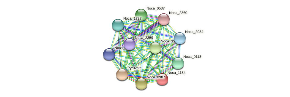 Noca_1184 protein (Nocardioides sp. JS614) - STRING interaction network