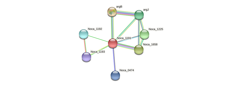 Noca_1191 protein (Nocardioides sp. JS614) - STRING interaction network