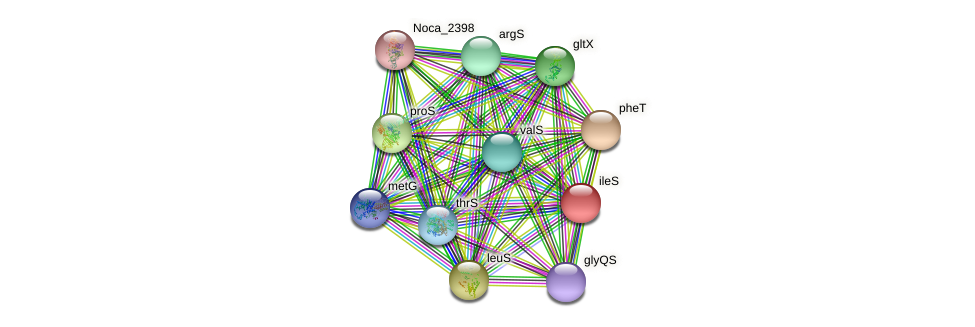ileS protein (Nocardioides sp. JS614) - STRING interaction network