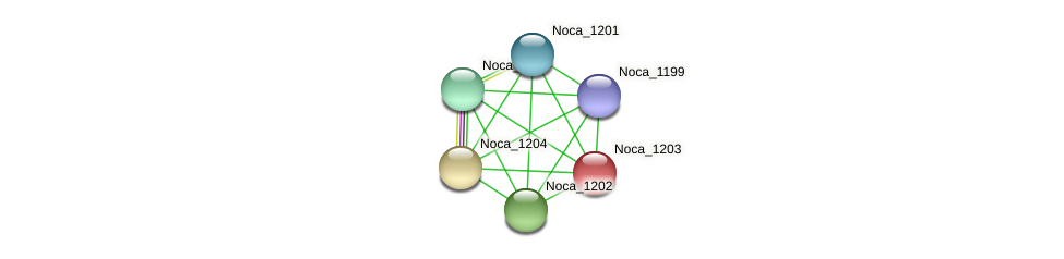 Noca_1203 protein (Nocardioides sp. JS614) - STRING interaction network
