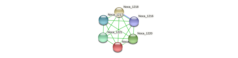 Noca_1219 protein (Nocardioides sp. JS614) - STRING interaction network