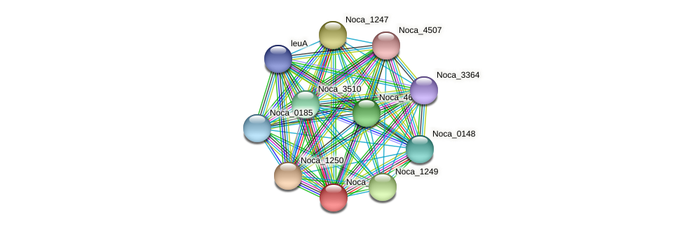 Noca_1248 protein (Nocardioides sp. JS614) - STRING interaction network