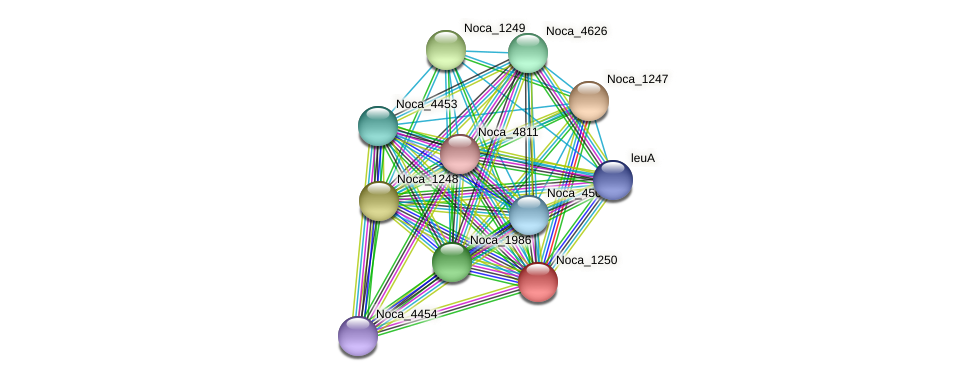 Noca_1250 protein (Nocardioides sp. JS614) - STRING interaction network