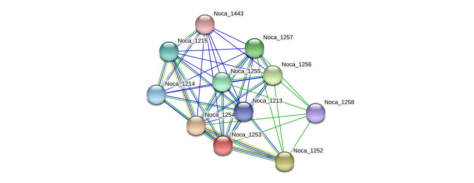 Noca_1253 protein (Nocardioides sp. JS614) - STRING interaction network