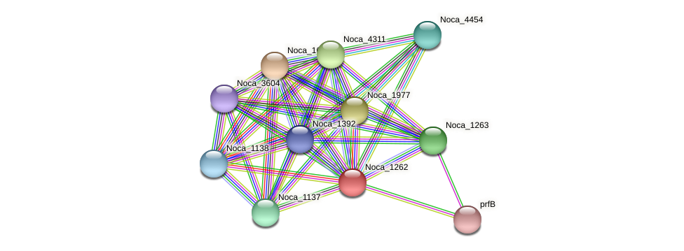 Noca_1262 protein (Nocardioides sp. JS614) - STRING interaction network