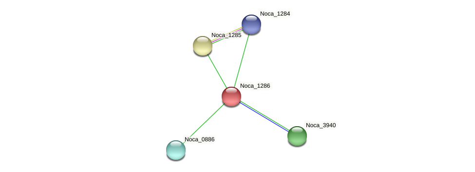 Noca_1286 protein (Nocardioides sp. JS614) - STRING interaction network