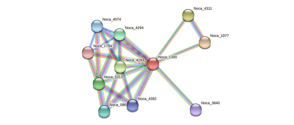Noca_1300 protein (Nocardioides sp. JS614) - STRING interaction network