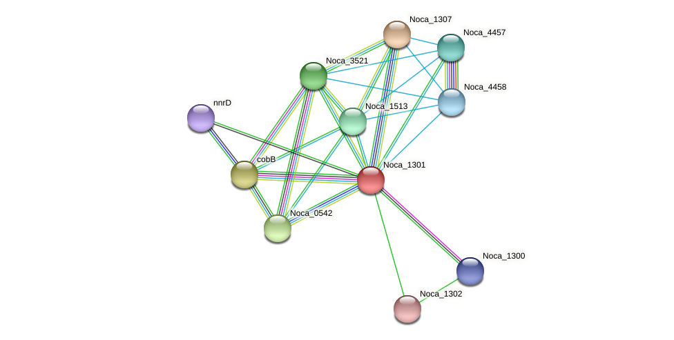 Noca_1301 protein (Nocardioides sp. JS614) - STRING interaction network