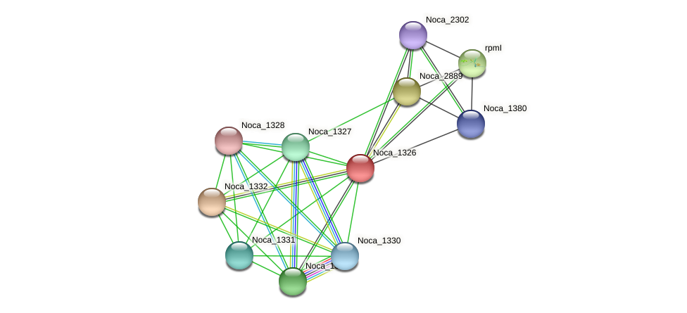 Noca_1326 protein (Nocardioides sp. JS614) - STRING interaction network