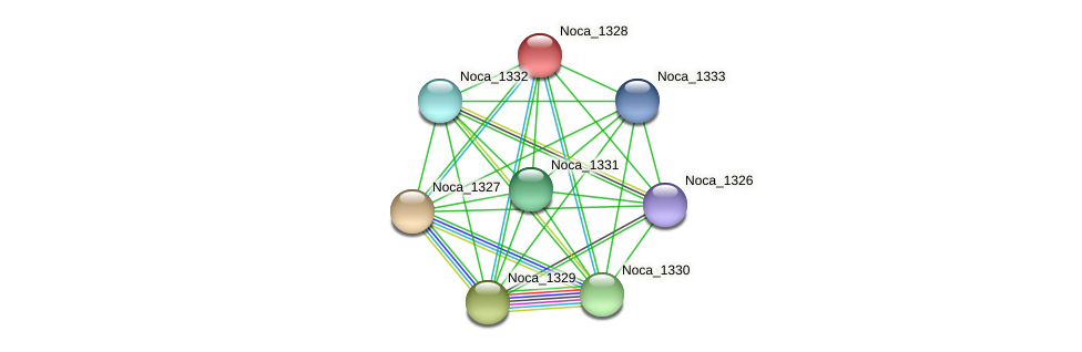 Noca_1328 protein (Nocardioides sp. JS614) - STRING interaction network
