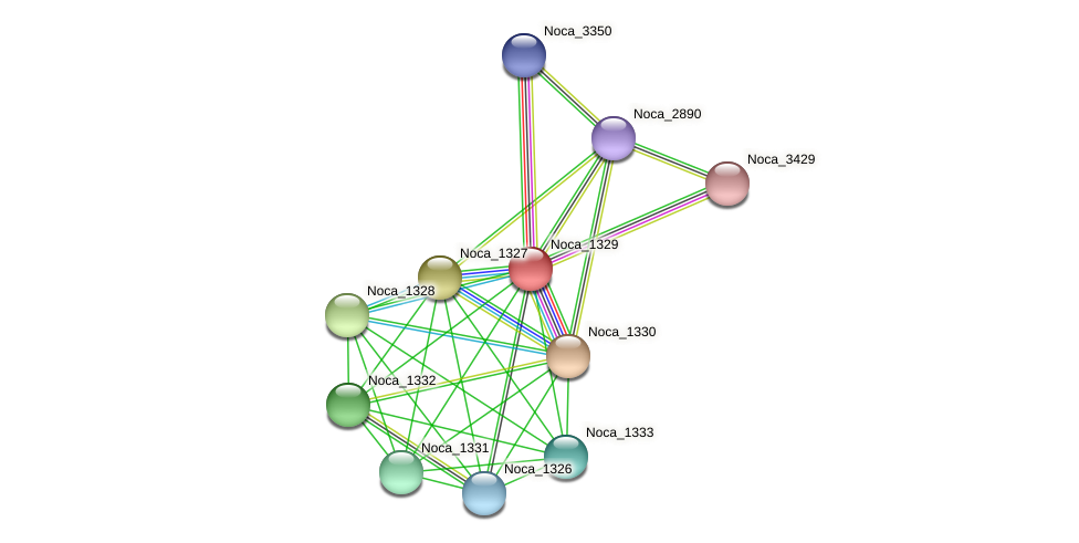 Noca_1329 protein (Nocardioides sp. JS614) - STRING interaction network