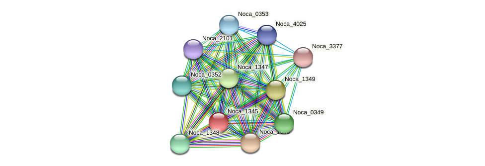 Noca_1345 protein (Nocardioides sp. JS614) - STRING interaction network