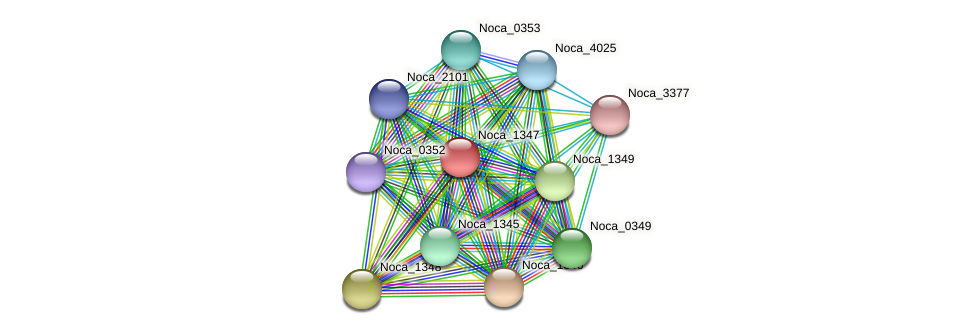 Noca_1347 protein (Nocardioides sp. JS614) - STRING interaction network