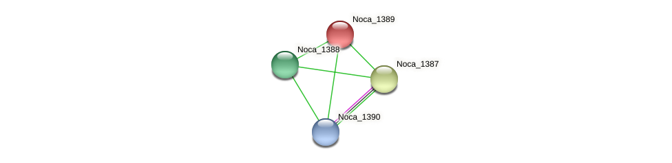 Noca_1389 protein (Nocardioides sp. JS614) - STRING interaction network