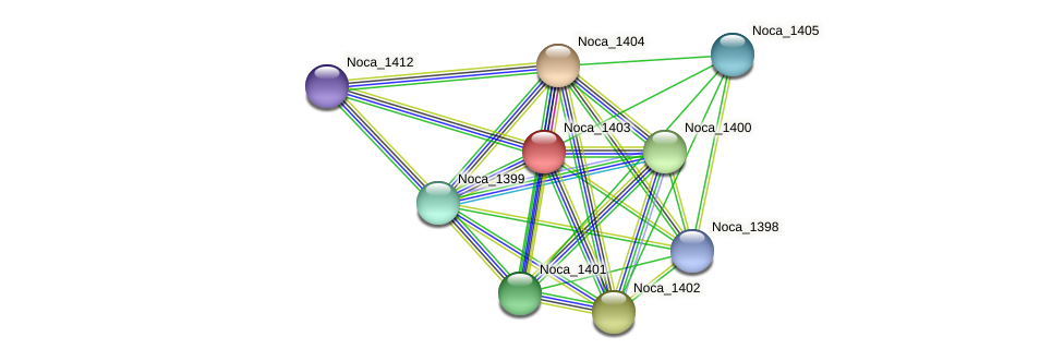 Noca_1403 protein (Nocardioides sp. JS614) - STRING interaction network
