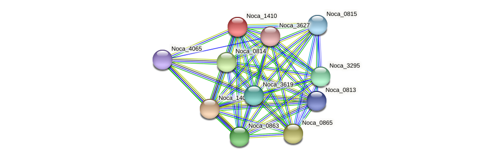 Noca_1410 protein (Nocardioides sp. JS614) - STRING interaction network