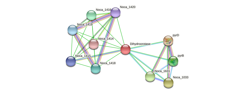 Noca_1417 protein (Nocardioides sp. JS614) - STRING interaction network
