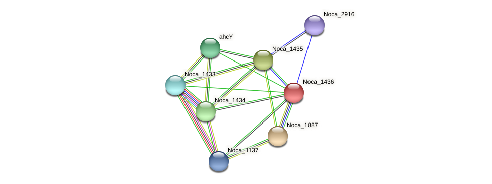 Noca_1436 protein (Nocardioides sp. JS614) - STRING interaction network