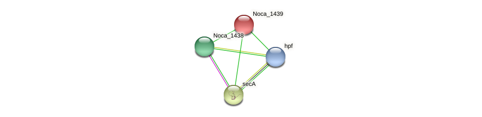 Noca_1439 protein (Nocardioides sp. JS614) - STRING interaction network