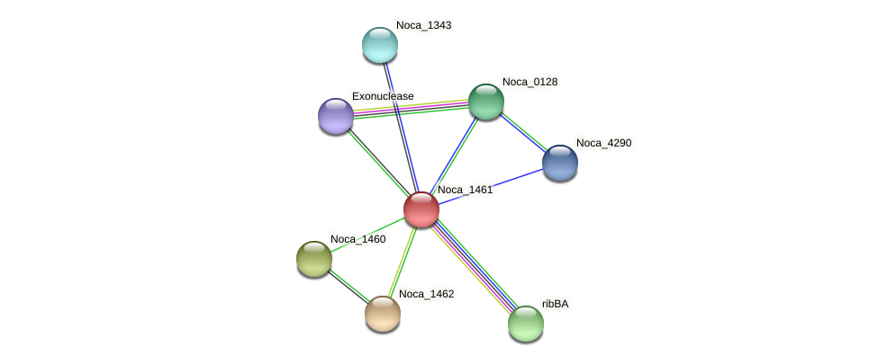 Noca_1461 protein (Nocardioides sp. JS614) - STRING interaction network