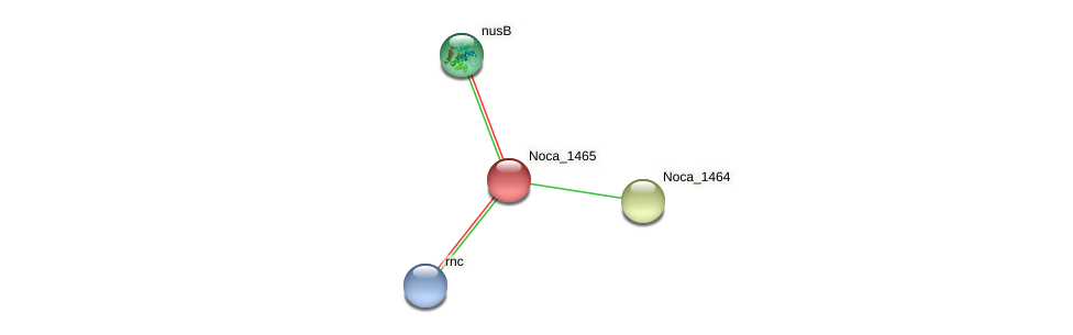 Noca_1465 protein (Nocardioides sp. JS614) - STRING interaction network