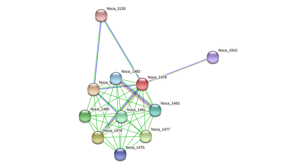 Noca_1479 protein (Nocardioides sp. JS614) - STRING interaction network