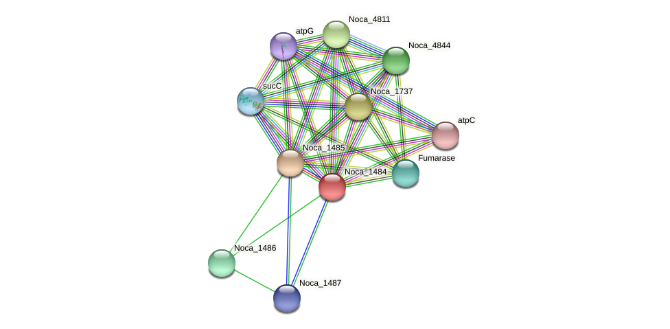 Noca_1484 protein (Nocardioides sp. JS614) - STRING interaction network