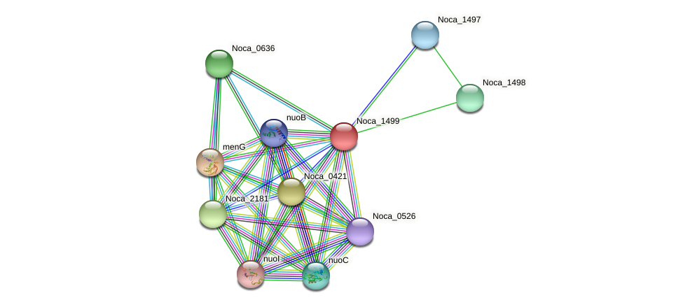 Noca_1499 protein (Nocardioides sp. JS614) - STRING interaction network
