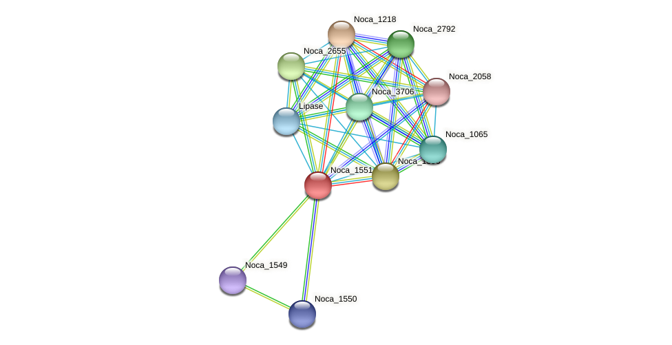Noca_1551 protein (Nocardioides sp. JS614) - STRING interaction network
