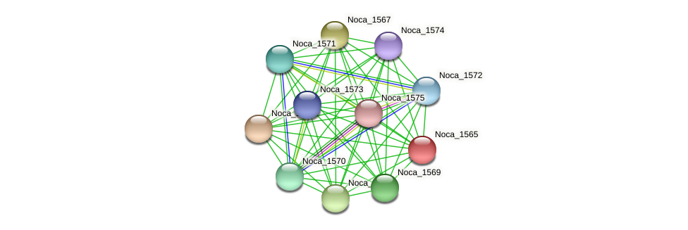 Noca_1565 protein (Nocardioides sp. JS614) - STRING interaction network