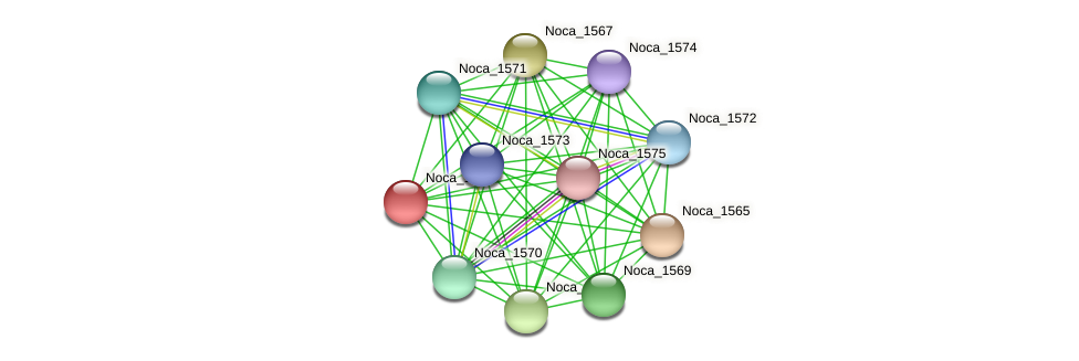 Noca_1566 protein (Nocardioides sp. JS614) - STRING interaction network