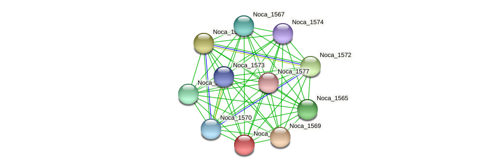 Noca_1568 protein (Nocardioides sp. JS614) - STRING interaction network