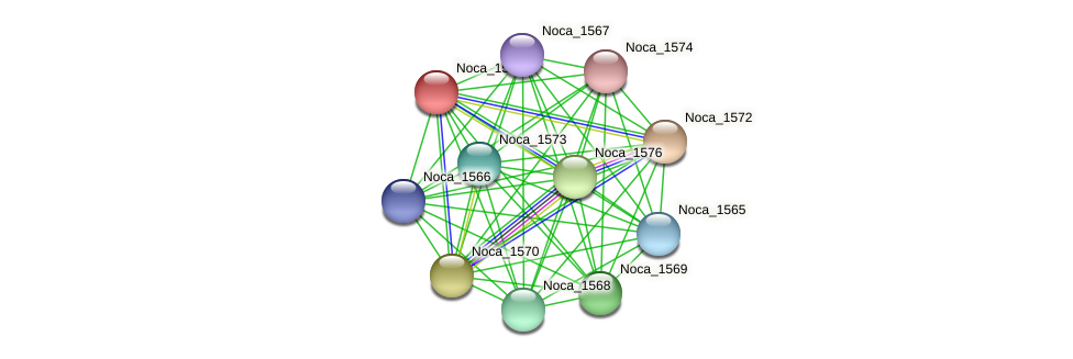 Noca_1571 protein (Nocardioides sp. JS614) - STRING interaction network