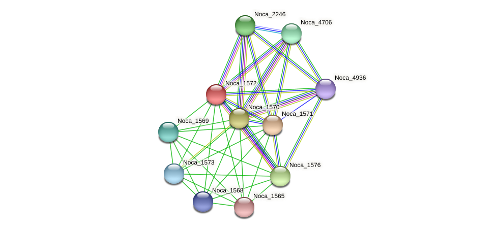 Noca_1572 protein (Nocardioides sp. JS614) - STRING interaction network