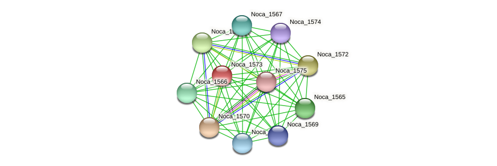Noca_1573 protein (Nocardioides sp. JS614) - STRING interaction network