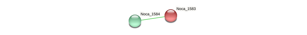 Noca_1583 protein (Nocardioides sp. JS614) - STRING interaction network