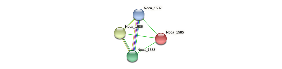 Noca_1585 protein (Nocardioides sp. JS614) - STRING interaction network